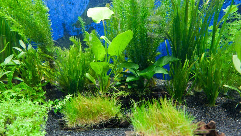 Vegyünk akvárium műnövényt?